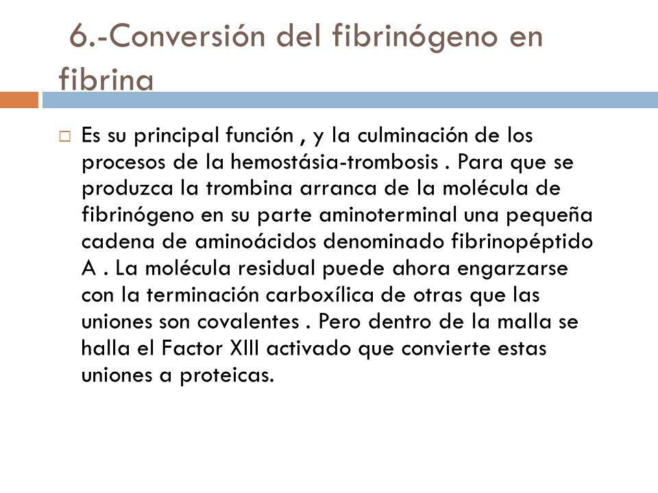 6.-Conversión del fibrinógeno en fibrina