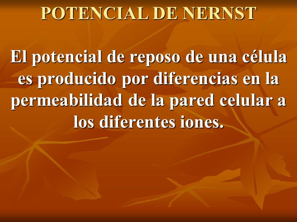 POTENCIAL DE NERNST El potencial de reposo de una célula es producido por diferencias en la permeabilidad de la pared celular a los diferentes iones.
