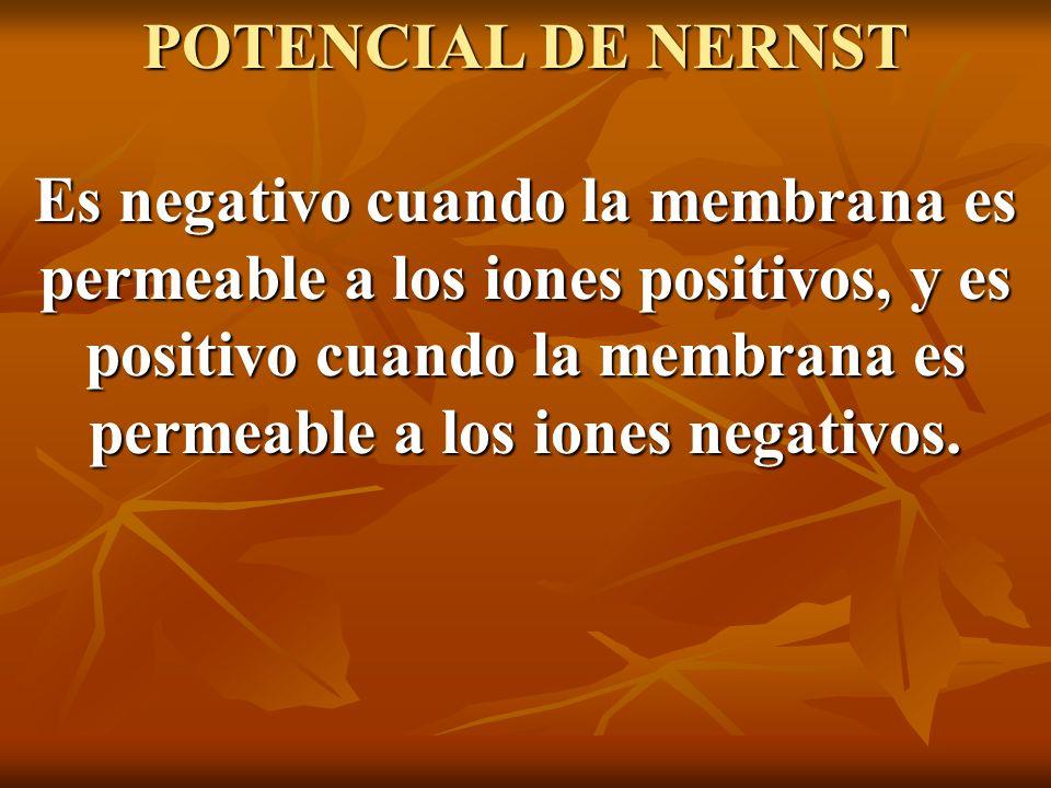 POTENCIAL DE NERNST Es negativo cuando la membrana es permeable a los iones positivos, y es positivo cuando la membrana es permeable a los iones negativos.