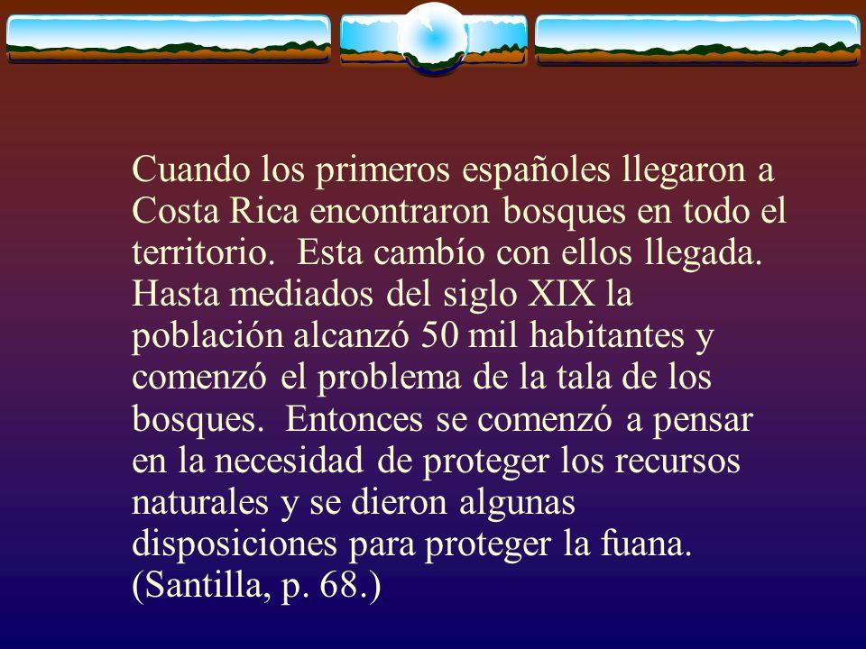 Cuando los primeros españoles llegaron a Costa Rica encontraron bosques en todo el territorio.