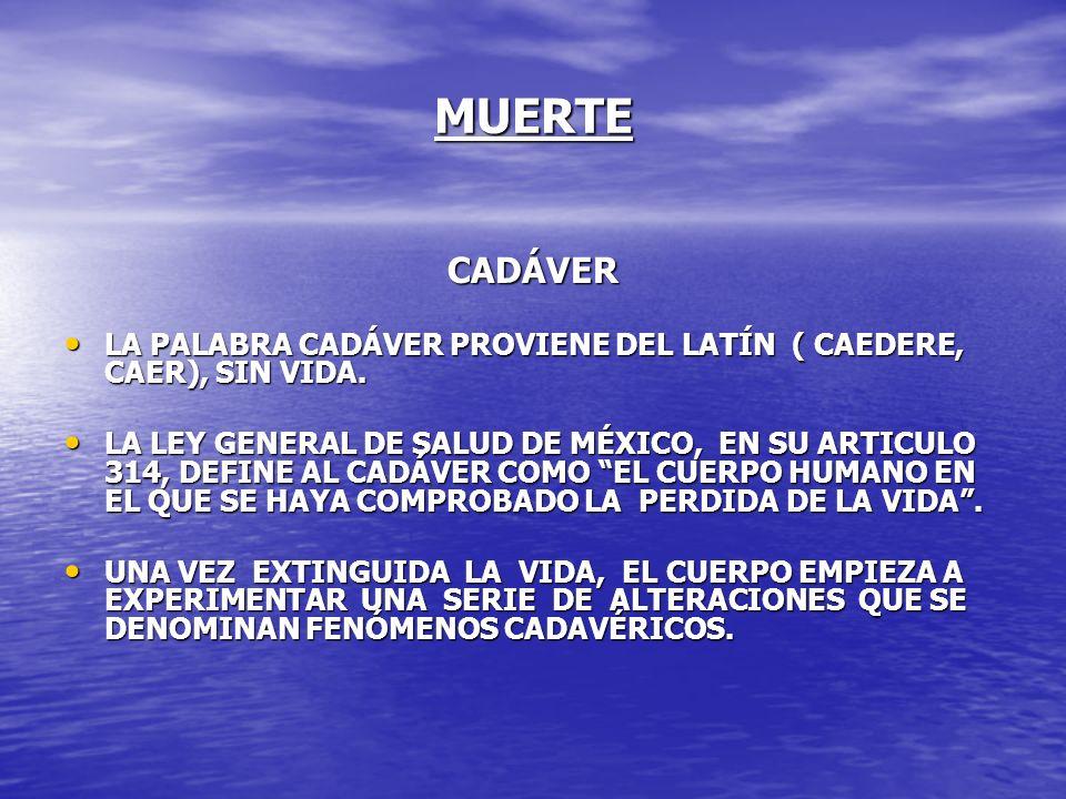 MUERTE CADÁVER. LA PALABRA CADÁVER PROVIENE DEL LATÍN ( CAEDERE, CAER), SIN VIDA.