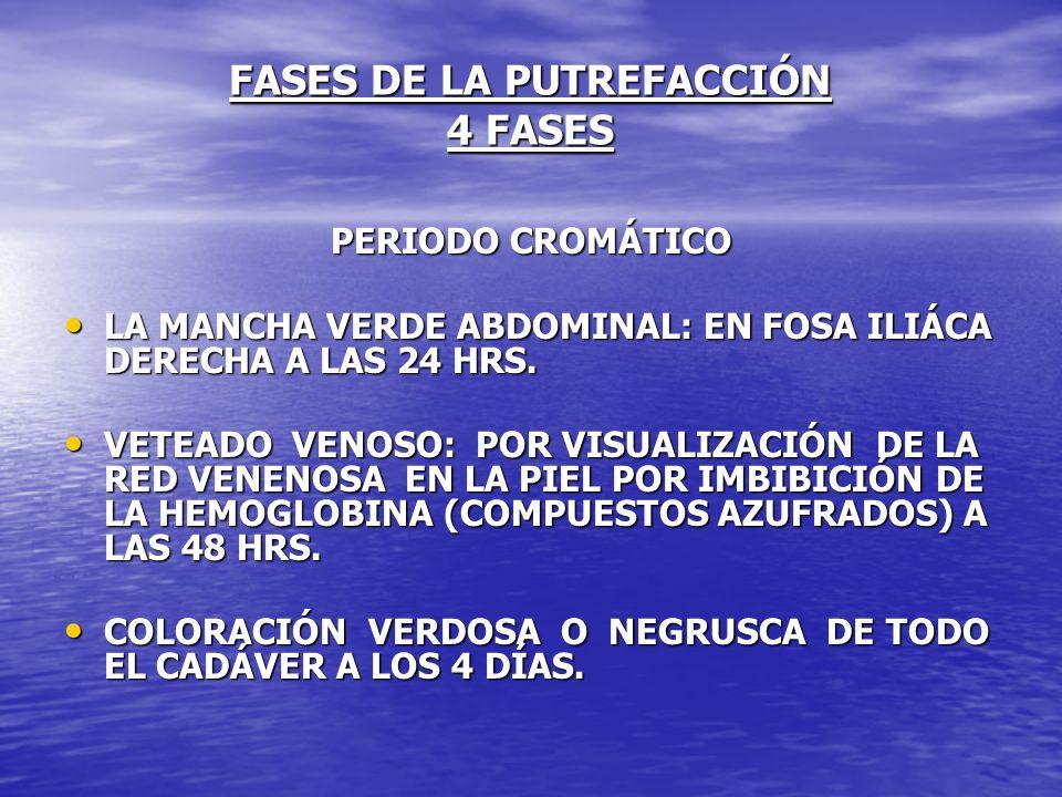 FASES DE LA PUTREFACCIÓN 4 FASES