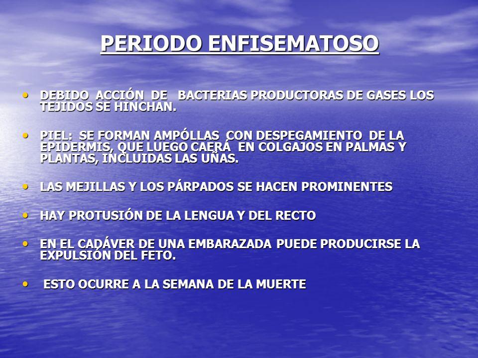 PERIODO ENFISEMATOSO DEBIDO ACCIÓN DE BACTERIAS PRODUCTORAS DE GASES LOS TEJIDOS SE HINCHAN.