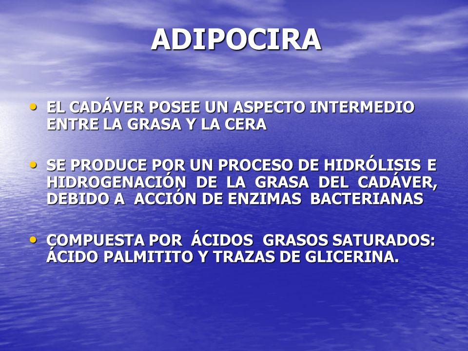 ADIPOCIRA EL CADÁVER POSEE UN ASPECTO INTERMEDIO ENTRE LA GRASA Y LA CERA.