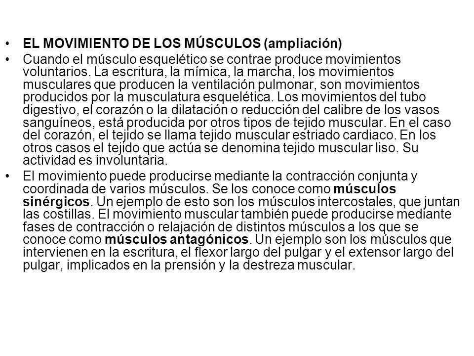 EL MOVIMIENTO DE LOS MÚSCULOS (ampliación)