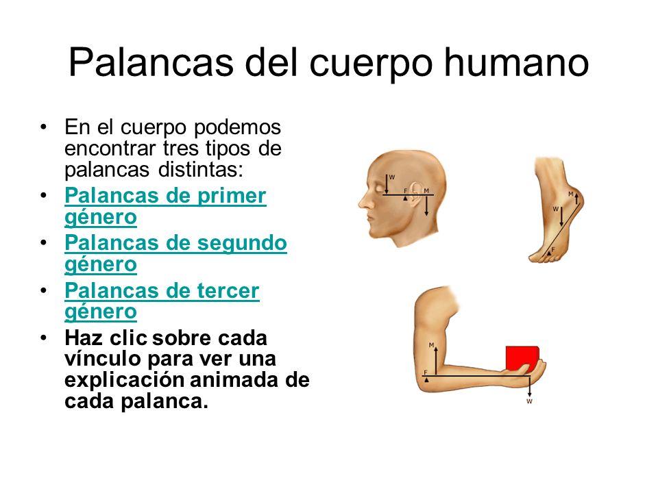 Palancas del cuerpo humano
