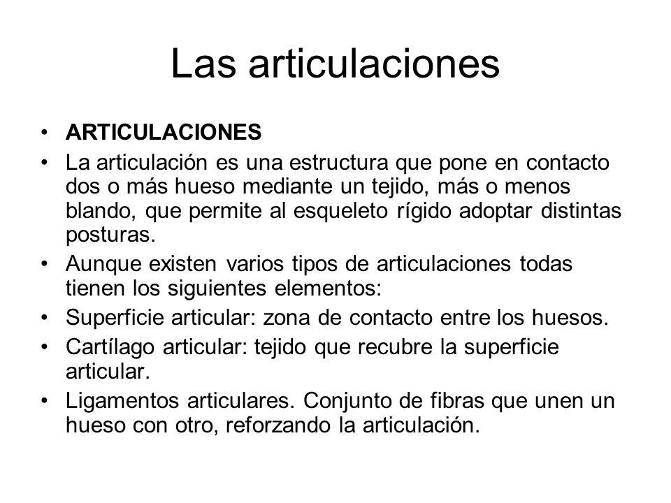 Las articulaciones ARTICULACIONES