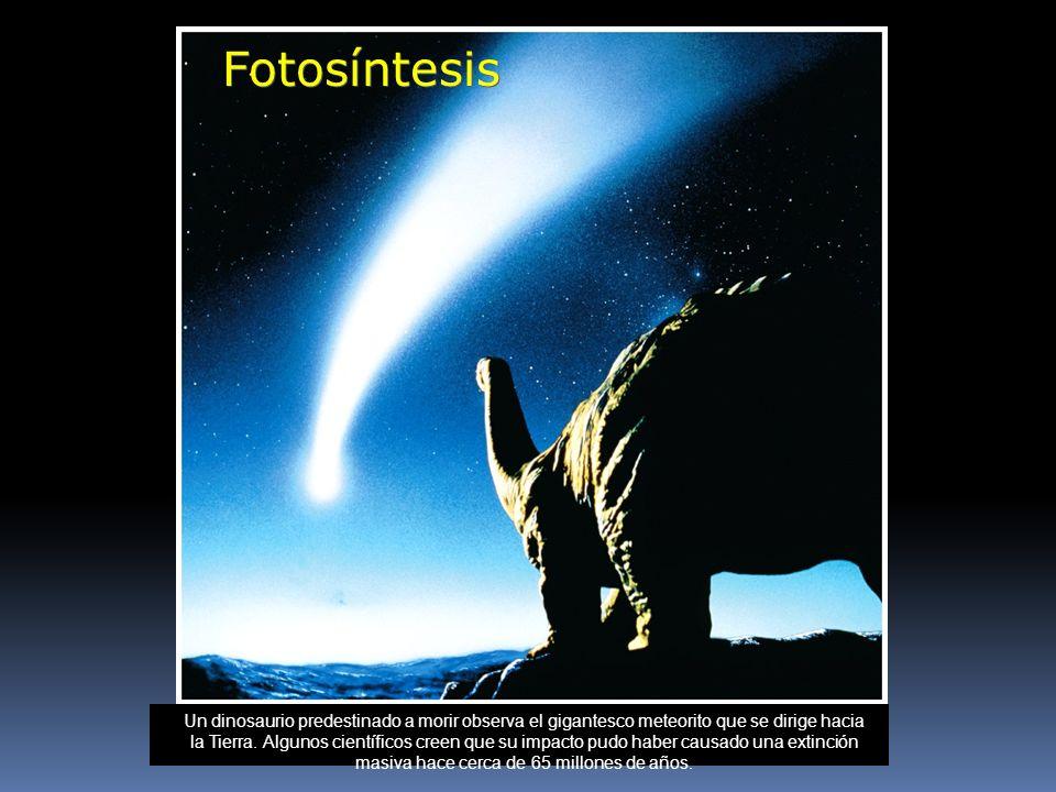 Fotosíntesis Introducción al capítulo 7