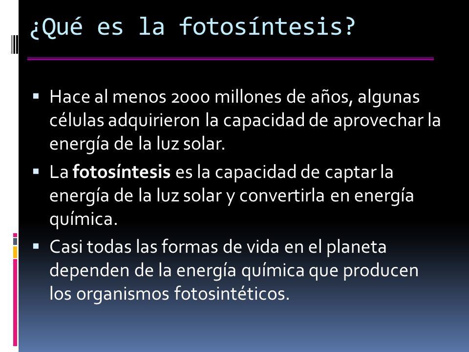 ¿Qué es la fotosíntesis