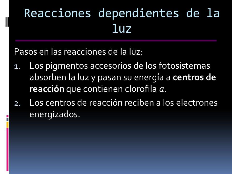 Reacciones dependientes de la luz