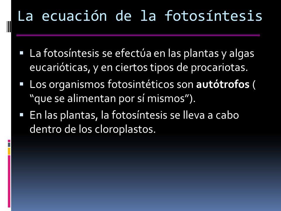 La ecuación de la fotosíntesis