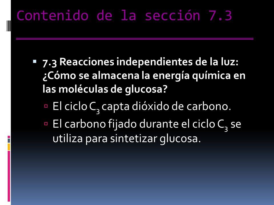 Contenido de la sección 7.3