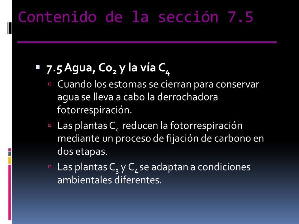 Contenido de la sección 7.5