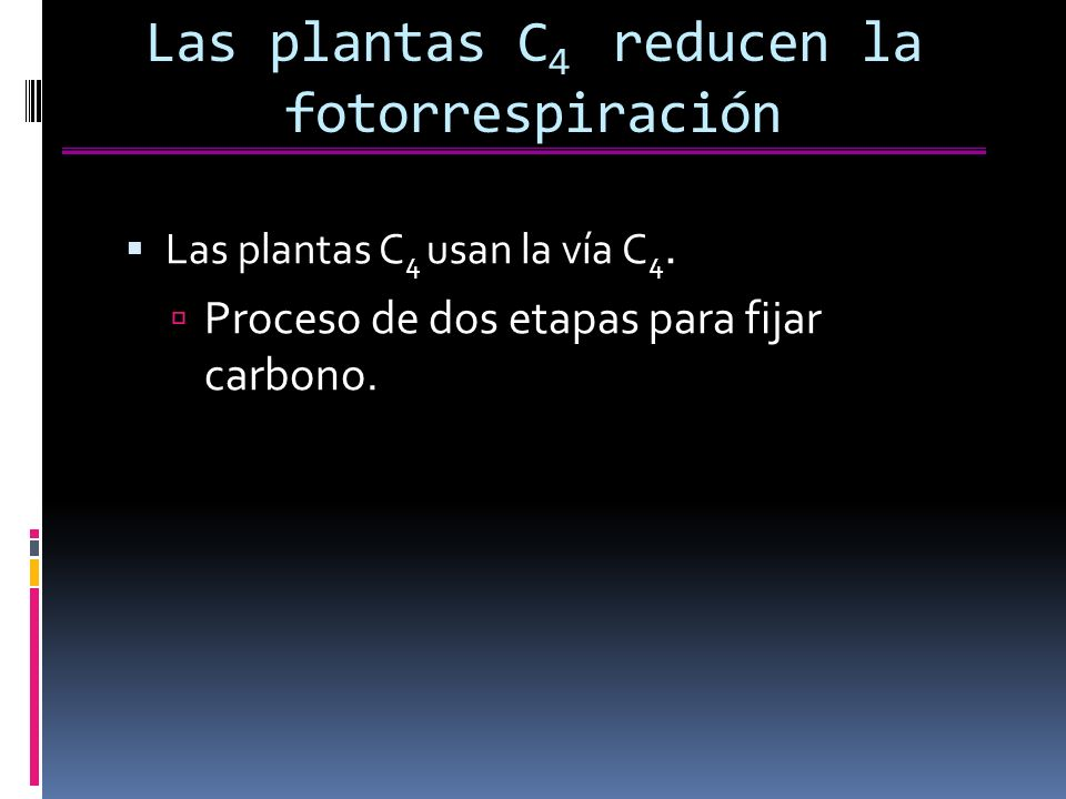 Las plantas C4 reducen la fotorrespiración