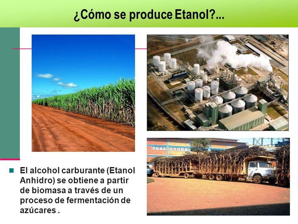 ¿Cómo se produce Etanol ...