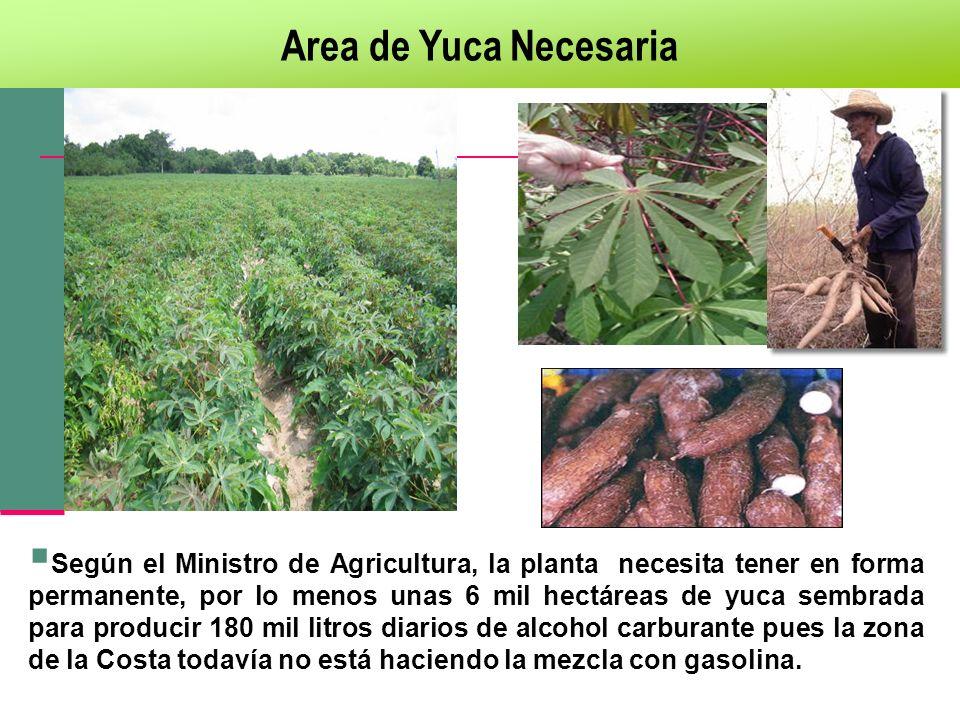 Area de Yuca Necesaria