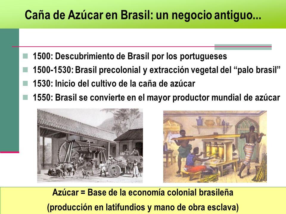 Caña de Azúcar en Brasil: un negocio antiguo...