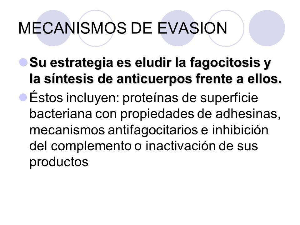 MECANISMOS DE EVASION Su estrategia es eludir la fagocitosis y la síntesis de anticuerpos frente a ellos.