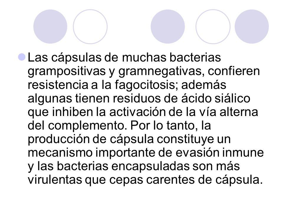 Las cápsulas de muchas bacterias grampositivas y gramnegativas, confieren resistencia a la fagocitosis; además algunas tienen residuos de ácido siálico que inhiben la activación de la vía alterna del complemento.