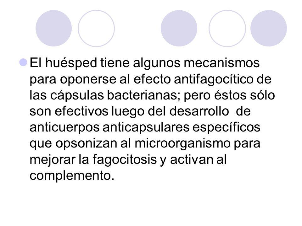 El huésped tiene algunos mecanismos para oponerse al efecto antifagocítico de las cápsulas bacterianas; pero éstos sólo son efectivos luego del desarrollo de anticuerpos anticapsulares específicos que opsonizan al microorganismo para mejorar la fagocitosis y activan al complemento.