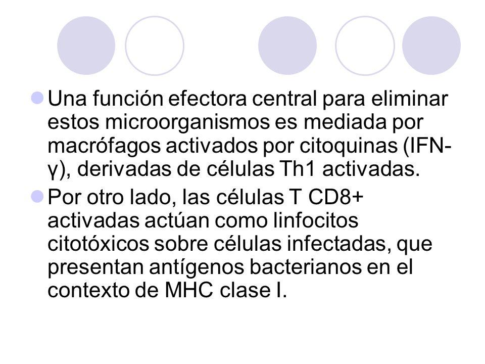 Una función efectora central para eliminar estos microorganismos es mediada por macrófagos activados por citoquinas (IFN-γ), derivadas de células Th1 activadas.