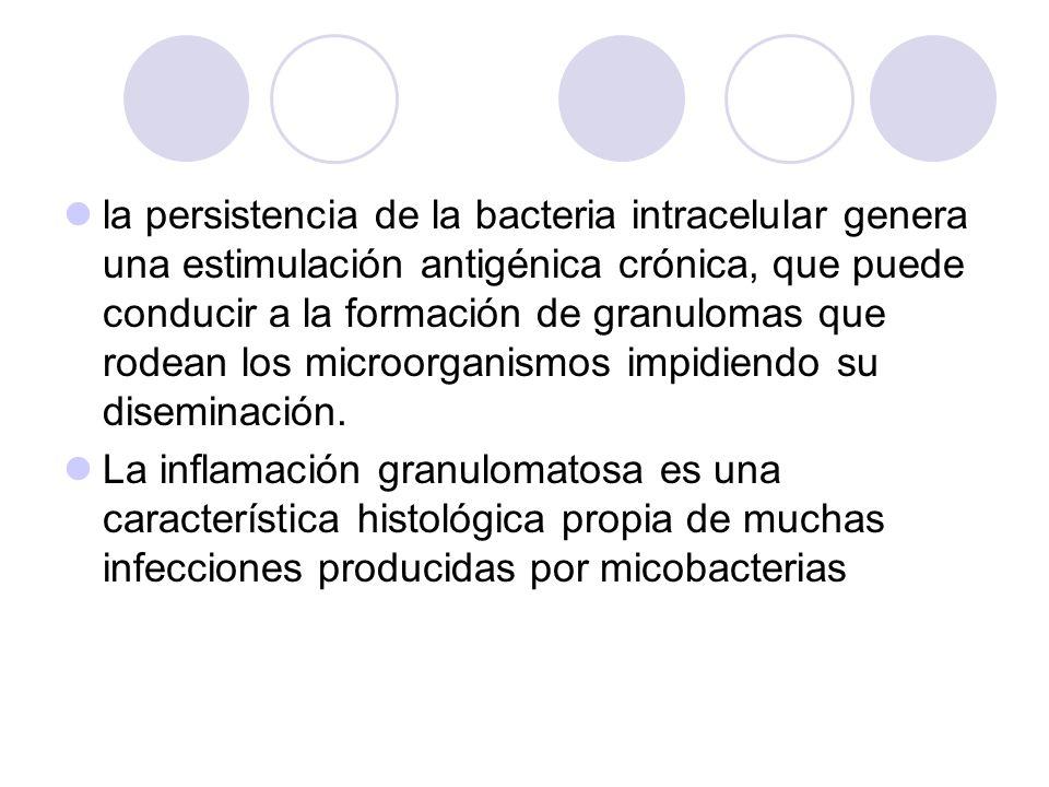 la persistencia de la bacteria intracelular genera una estimulación antigénica crónica, que puede conducir a la formación de granulomas que rodean los microorganismos impidiendo su diseminación.