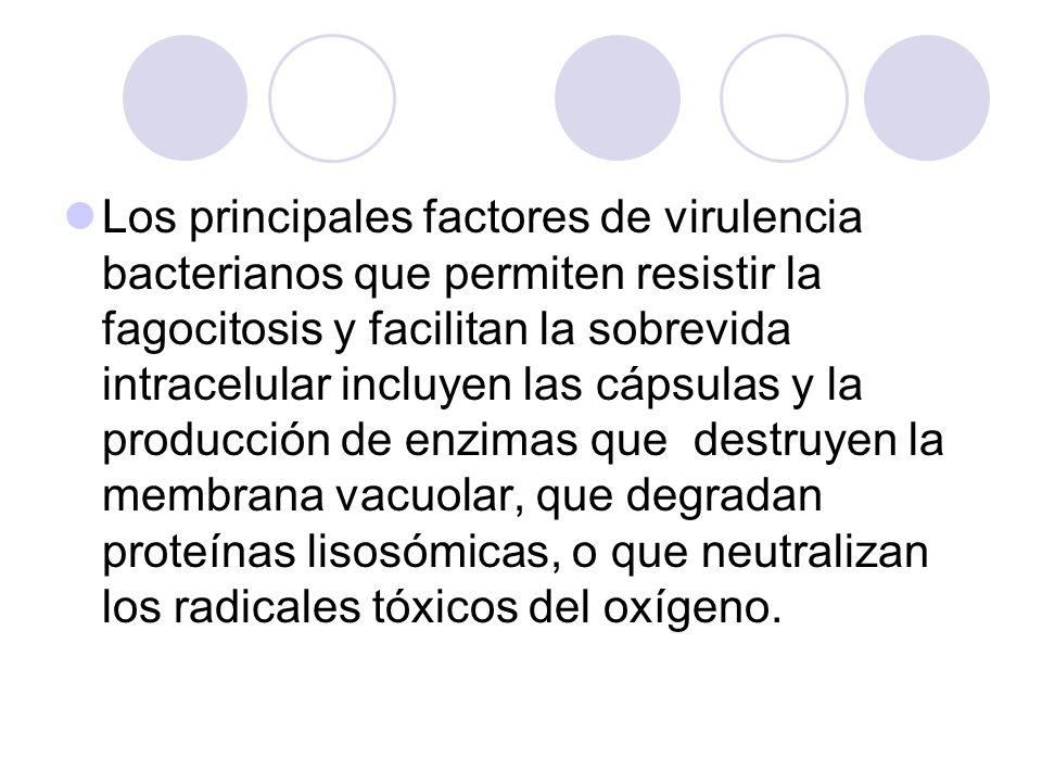 Los principales factores de virulencia bacterianos que permiten resistir la fagocitosis y facilitan la sobrevida intracelular incluyen las cápsulas y la producción de enzimas que destruyen la membrana vacuolar, que degradan proteínas lisosómicas, o que neutralizan los radicales tóxicos del oxígeno.
