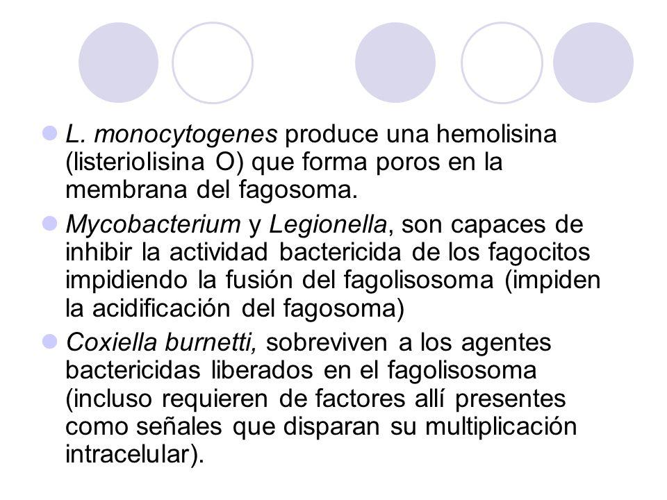 L. monocytogenes produce una hemolisina (listeriolisina O) que forma poros en la membrana del fagosoma.