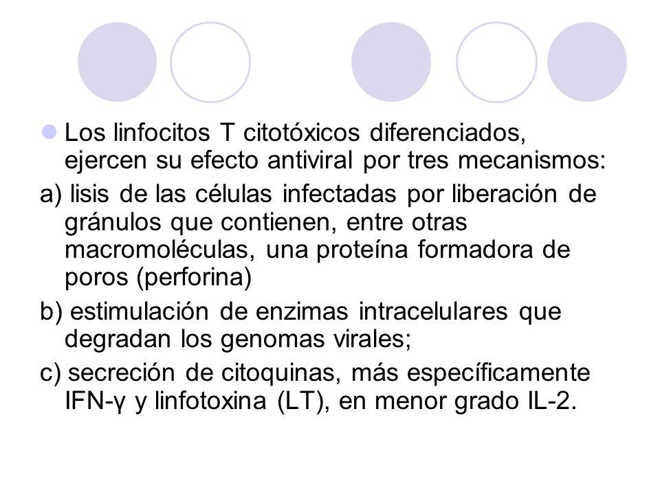 Los linfocitos T citotóxicos diferenciados, ejercen su efecto antiviral por tres mecanismos:
