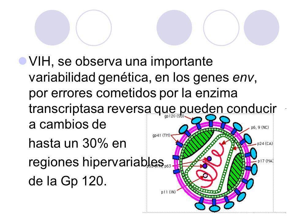 VIH, se observa una importante variabilidad genética, en los genes env, por errores cometidos por la enzima transcriptasa reversa que pueden conducir a cambios de