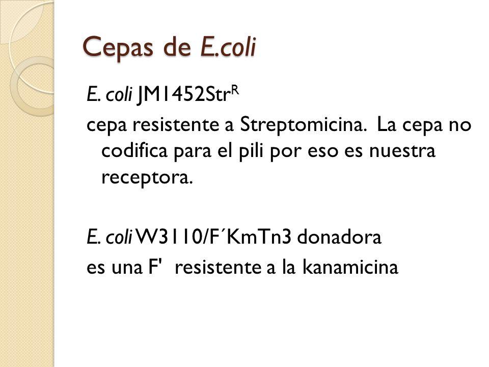 Cepas de E.coli