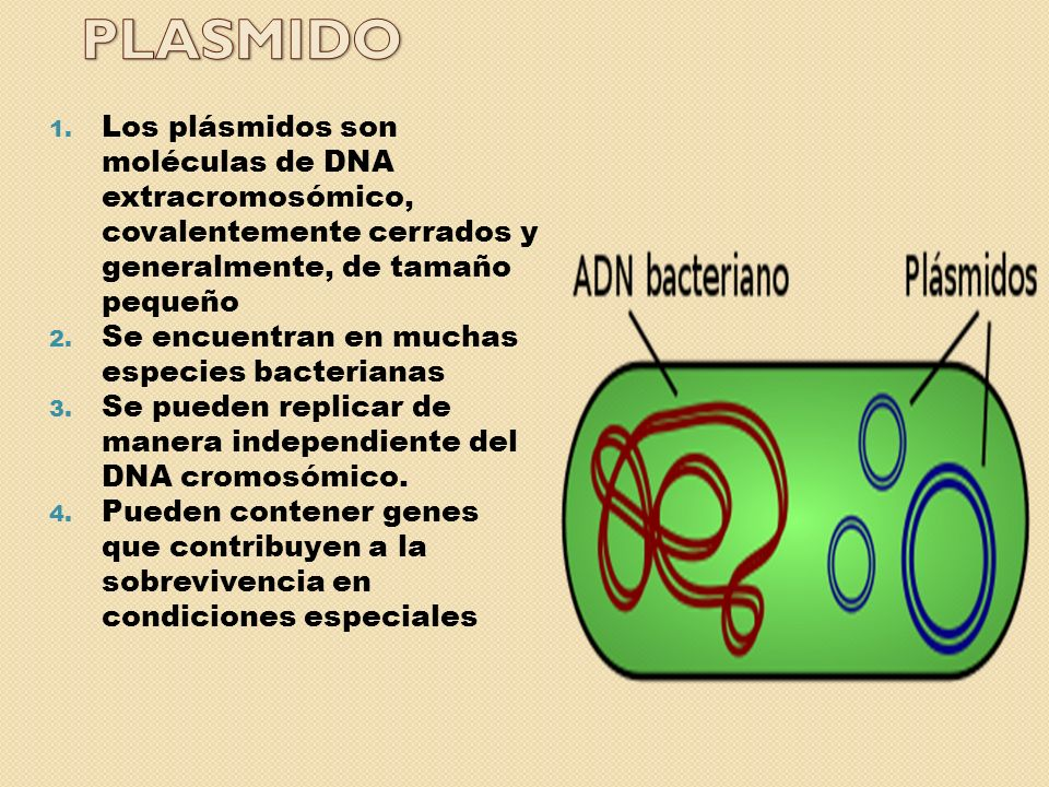 PLASMIDO Los plásmidos son moléculas de DNA extracromosómico, covalentemente cerrados y generalmente, de tamaño pequeño.