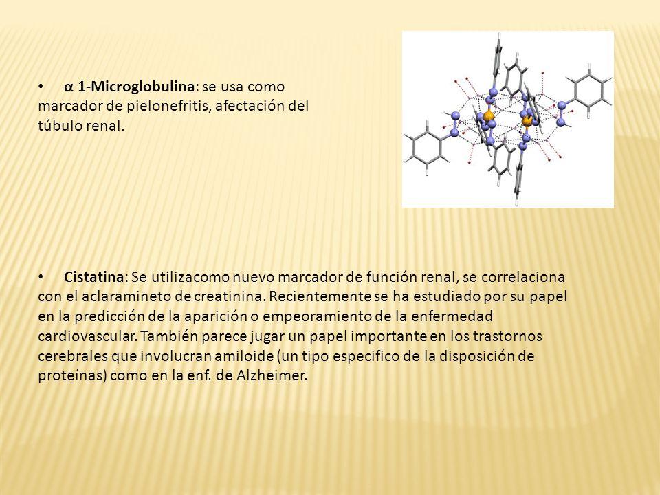 α 1-Microglobulina: se usa como marcador de pielonefritis, afectación del túbulo renal.