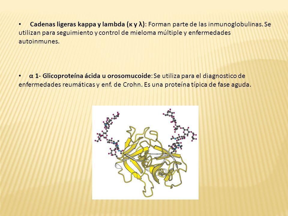 Cadenas ligeras kappa y lambda (κ y λ): Forman parte de las inmunoglobulinas. Se utilizan para seguimiento y control de mieloma múltiple y enfermedades autoinmunes.