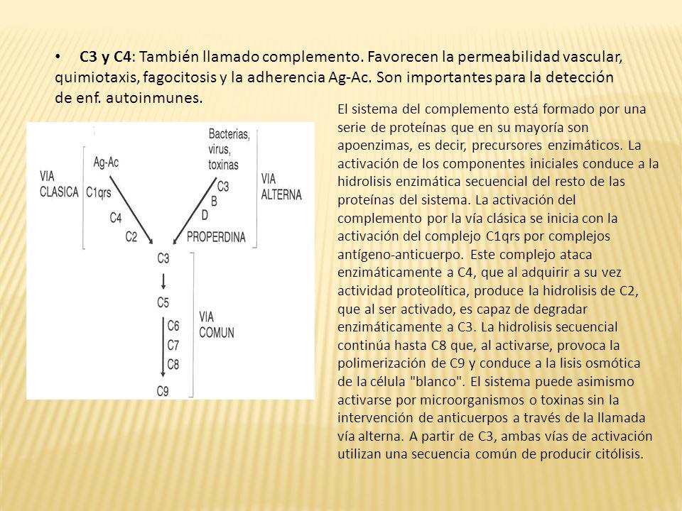 C3 y C4: También llamado complemento