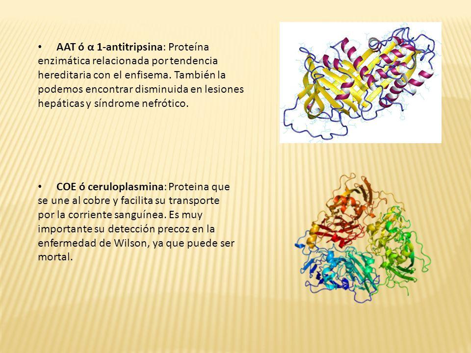 AAT ó α 1-antitripsina: Proteína enzimática relacionada por tendencia hereditaria con el enfisema. También la podemos encontrar disminuida en lesiones hepáticas y síndrome nefrótico.
