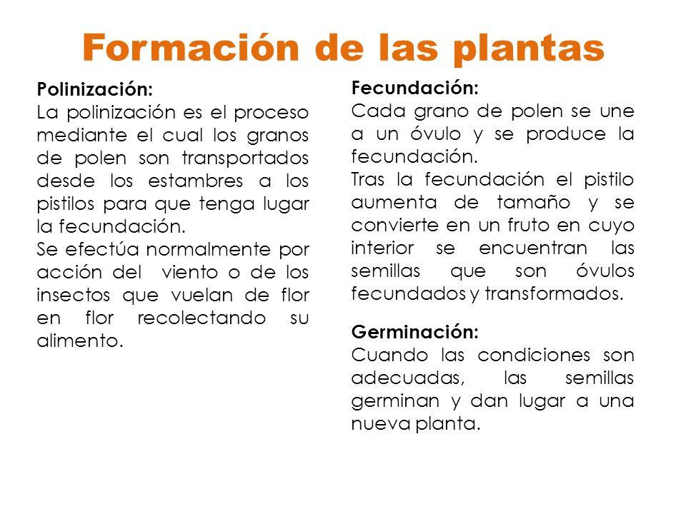 Formación de las plantas