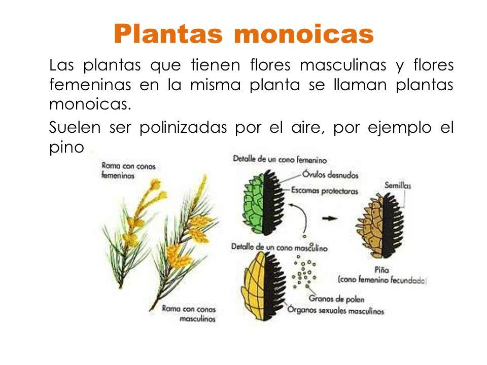 Reproducci n en plantas ppt descargar for Que son plantas ornamentales ejemplos