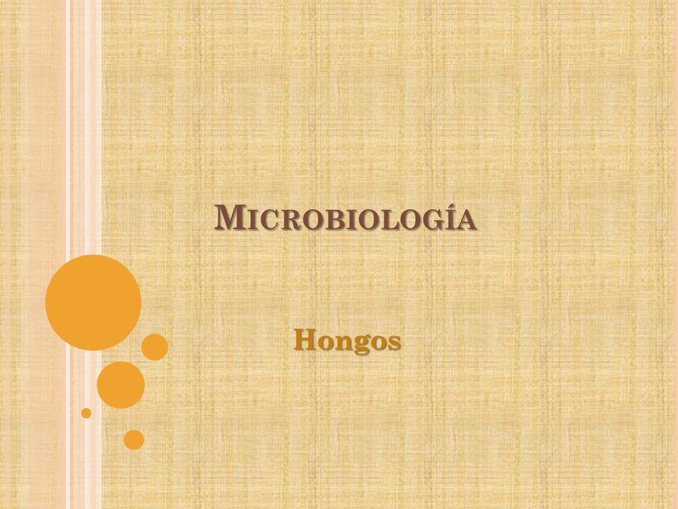 Microbiología Hongos