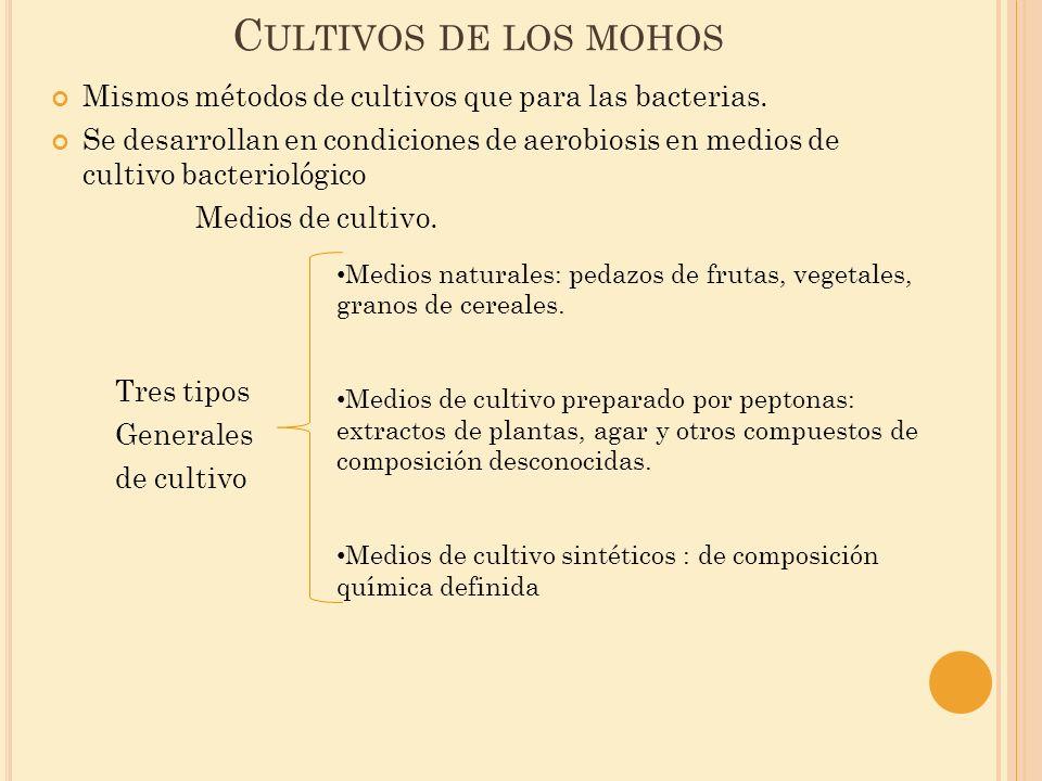 Cultivos de los mohos Mismos métodos de cultivos que para las bacterias.