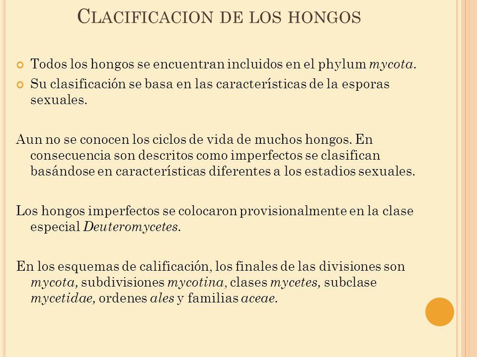 Clacificacion de los hongos