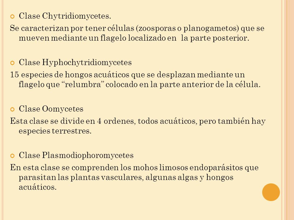 Clase Chytridiomycetes.