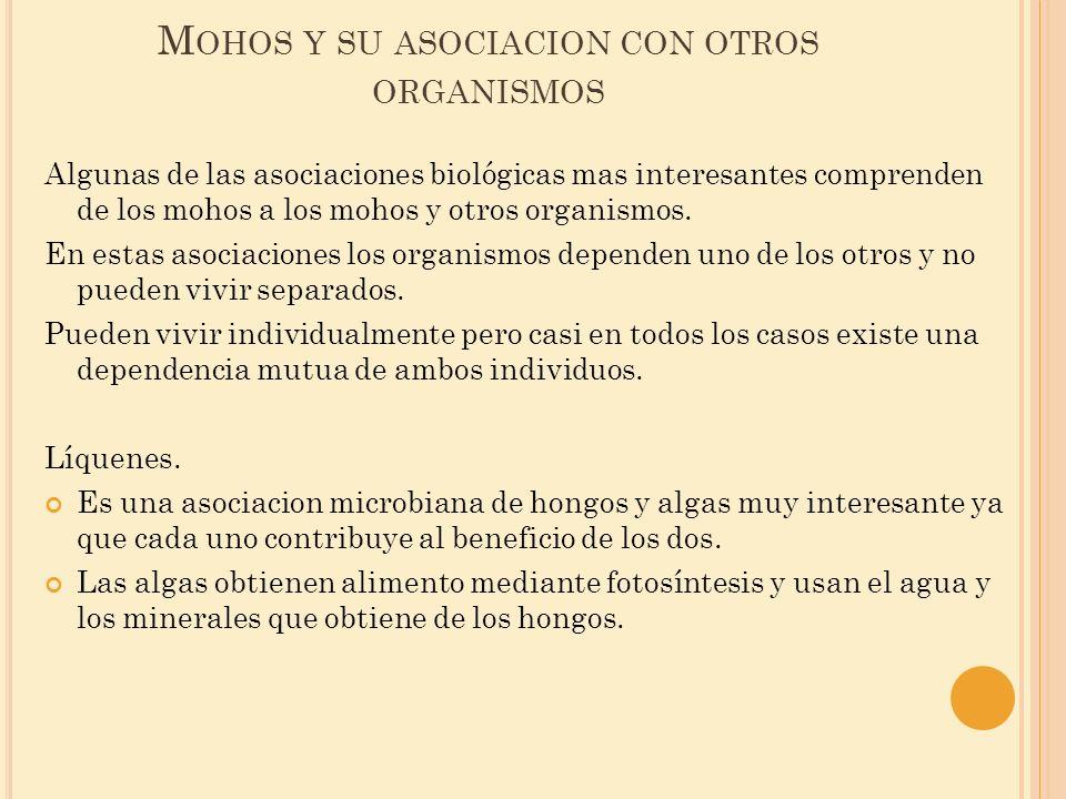 Mohos y su asociacion con otros organismos