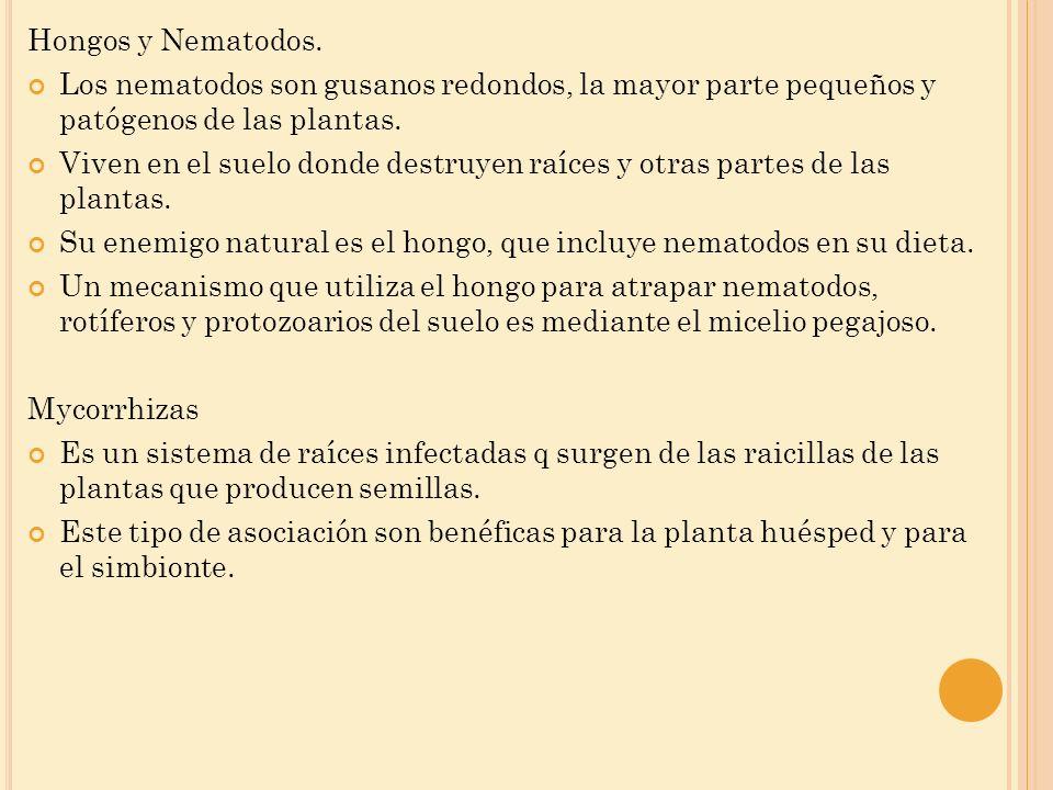 Hongos y Nematodos. Los nematodos son gusanos redondos, la mayor parte pequeños y patógenos de las plantas.