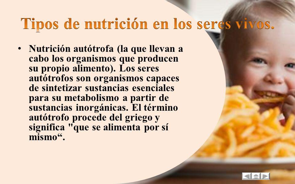 Tipos de nutrición en los seres vivos.