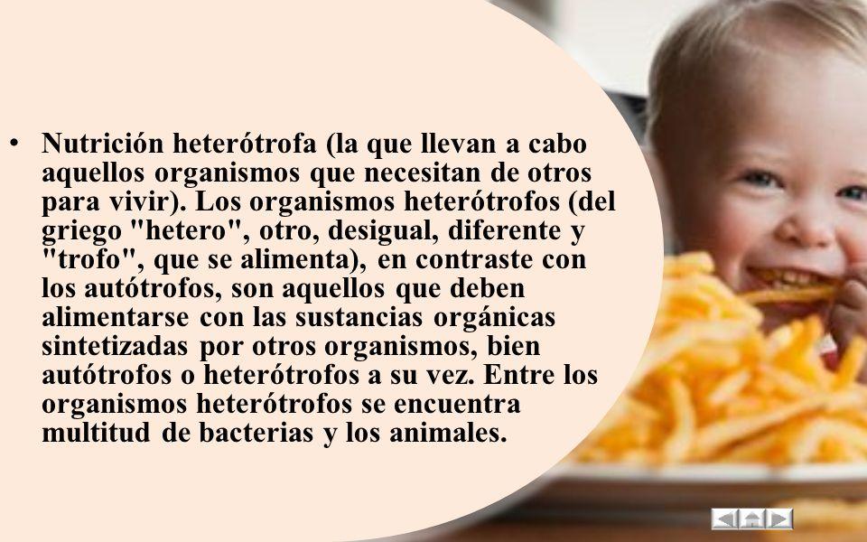 Nutrición heterótrofa (la que llevan a cabo aquellos organismos que necesitan de otros para vivir).