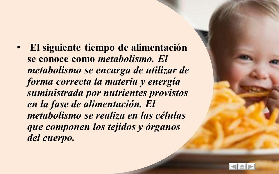 El siguiente tiempo de alimentación se conoce como metabolismo