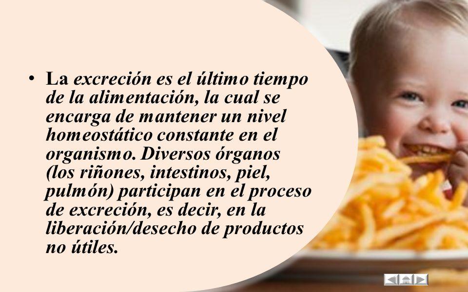 La excreción es el último tiempo de la alimentación, la cual se encarga de mantener un nivel homeostático constante en el organismo.