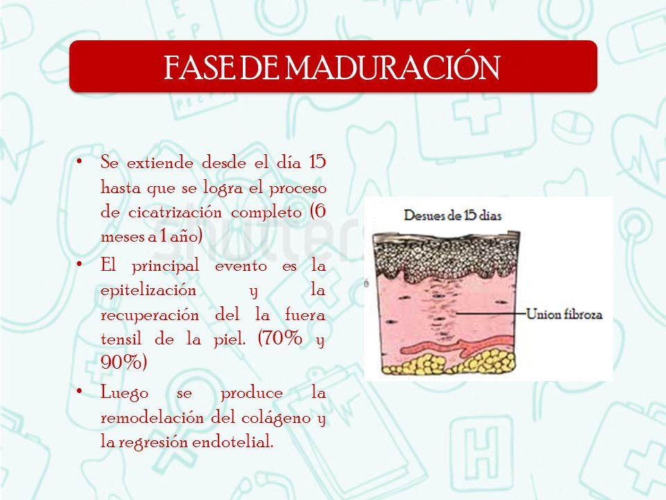 FASE DE MADURACIÓN Se extiende desde el día 15 hasta que se logra el proceso de cicatrización completo (6 meses a 1 año)