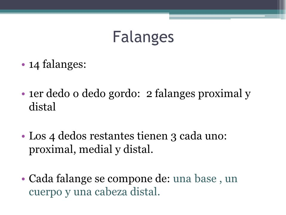 Falanges 14 falanges: 1er dedo o dedo gordo: 2 falanges proximal y distal. Los 4 dedos restantes tienen 3 cada uno: proximal, medial y distal.